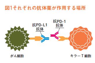 http://robust-health.jp/article/%EF%BC%93%EF%BC%91.png
