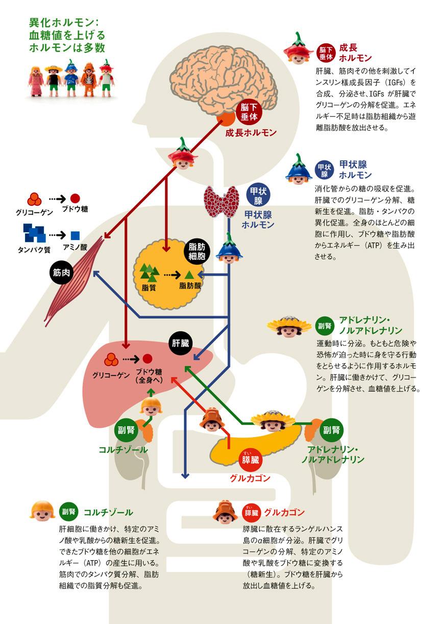 http://robust-health.jp/article/101_%E7%94%9F%E6%B4%BB%E7%BF%92%E6%85%A3%E7%97%852-1.jpg