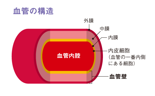 http://robust-health.jp/article/108_zuhan01.jpg