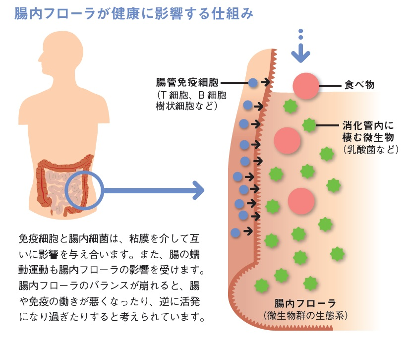 http://robust-health.jp/article/90-h.jpg